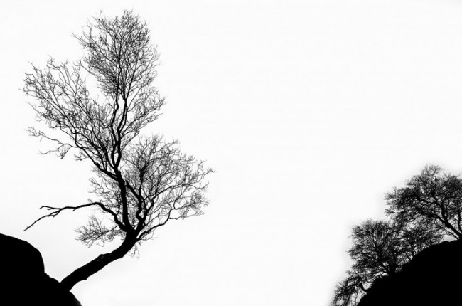 tree-316320_1280